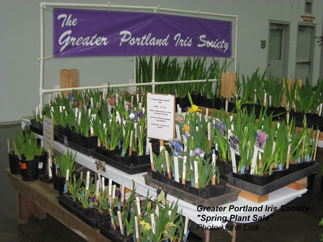 Gpis iris spring plant sale greater portland iris society for Portland spring home and garden show 2017