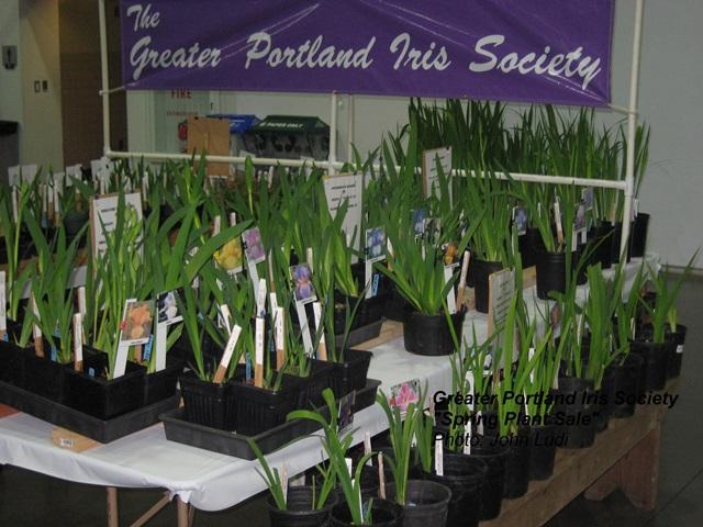 Gpis Iris Spring Plant Sale Greater Portland Iris Society