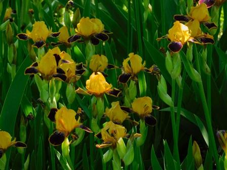 MTB an old favorite 'Bumblebee Deelite' in full bloom