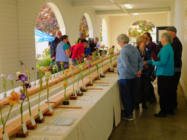Two judging panels evaluating the early bloom entries for ribbons