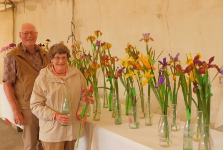The tall irises had to be cut short to fit on the tables.