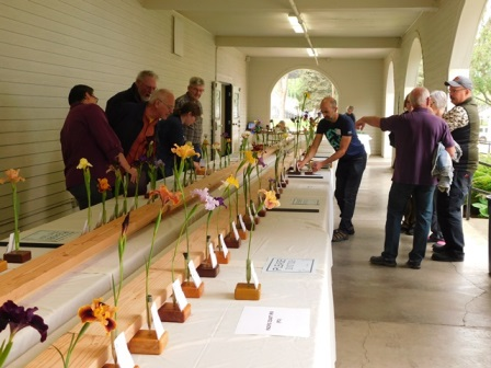 Entries are placed in class order and judged by sanctioned American Iris Society Judges.